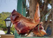 ראש חזיר בכניסה לבית הכנסת. צפו