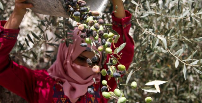 רבנים למען זכויות אדם: תרמו וקבלו סבון פלסטיני