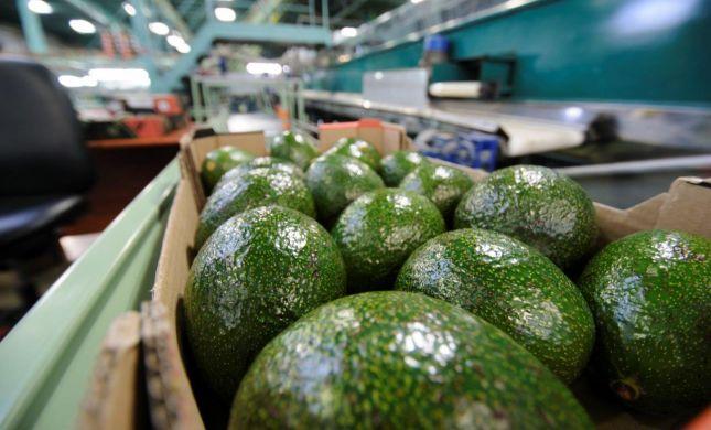 חדש: החקלאים יוצאים למאבק בתופעת הגניבות