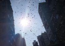מטורף: מיליונר נעצר לאחר שזרק כסף מגג בניין