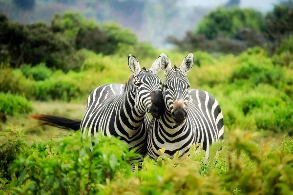 טיול בטנזניה עם כל המשפחה