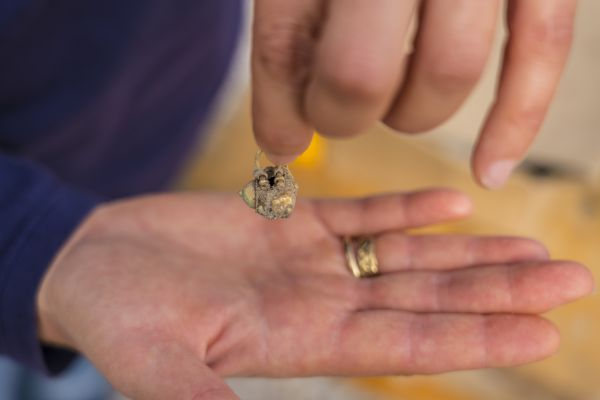 דמי חנוכה: נחשפו מטבעות ועגיל זהב בני כ900 שנה