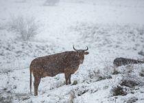 מזג האוויר: בשבת מתקרר, ביום ראשון אפשרות לשלג