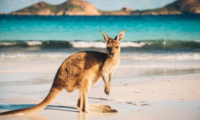 אוסטרליה בוערת: גל חום קיצוני נרשם במדינה