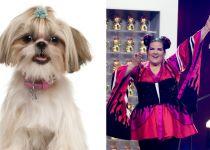מפתיע: כך הזכייה באירוויזיון השפיעה על הכלבים בארץ