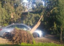 צפו: עץ נעקר מהמקום וקורס ליד אנשים