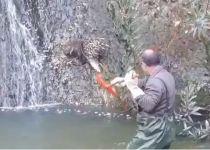 צפו: מנהל שמורת הטבע קפץ למים כדי להציל דורבן