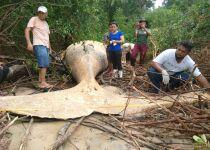 איך הגיע הלוויתן המת לג'ונגל באמזונס?