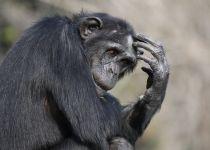 איך בכל זאת אפשר ללמד אבולוציה בשיעורי מדע?