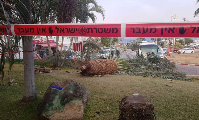 טרגדיה באילת: שני הרוגים כתוצאה מקריסת עץ דקל