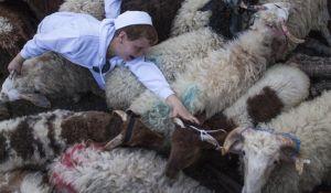 יהדות, פרשת שבוע אילו קרבנות נקריב כשהחיות יועלו לדרגת אדם?