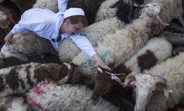 אילו קרבנות נקריב כשהחיות יועלו לדרגת אדם?
