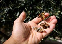 לשחרר את כל הפרפרים - דבר תורה לספר ויקרא