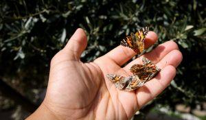 יהדות, פרשת שבוע לשחרר את כל הפרפרים - דבר תורה לספר ויקרא