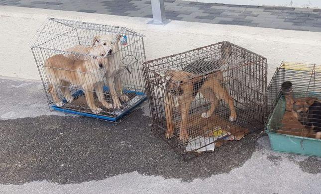 גורי כלבים הוחזקו בכלובים בכפר ערבי, השוטרים חילצו