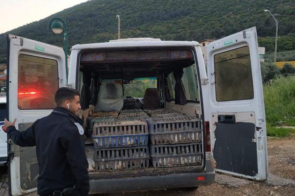 נעצר חשוד שהוביל מאות עופות דחוסים בארגזים