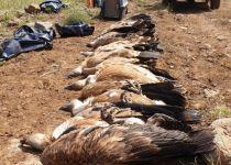 חשד להרעלה: 8 נשרים מתים אותרו ברמת הגולן