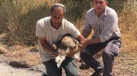 ארץ ישראל יפה, טיולים צפו: הנשר שהורעל ברמת הגולן משוחרר בחזרה לטבע