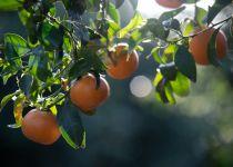 לאכול מפריה ולשבוע מטובה • הרב גורדין על הבקשה שהתגשמה