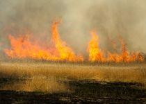 גל שריפות בעוטף ירושלים: עשרות בתים פונו מתושבים