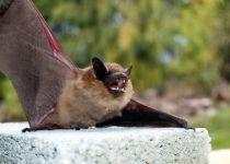 """כמה עטלפים יש ביו""""ש? הרשמו לכנס המדעי"""