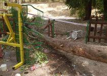 אסון בפארק בלכיש: עץ קרס על ילד בן 10 שנהרג