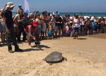 חוף בת ים: הצבים 'קובי' ו'משה' שבו לשחות בטבע