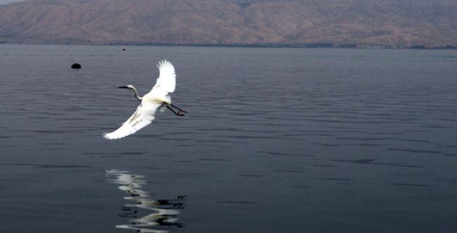 פתיחת סכר דגניה מתקרבת; כל הפרטים והנתונים