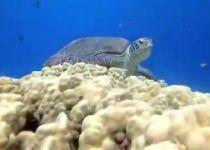 צפו: אורחים נדירים נצפו במפרץ אילת