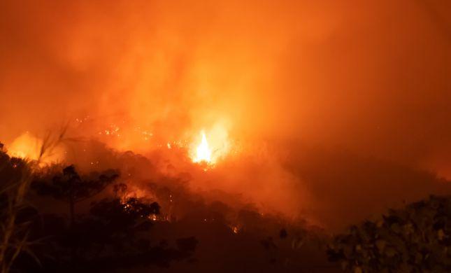 בעקבות השריפות באמזונס: 20 מיליון דולר יועברו לסיוע