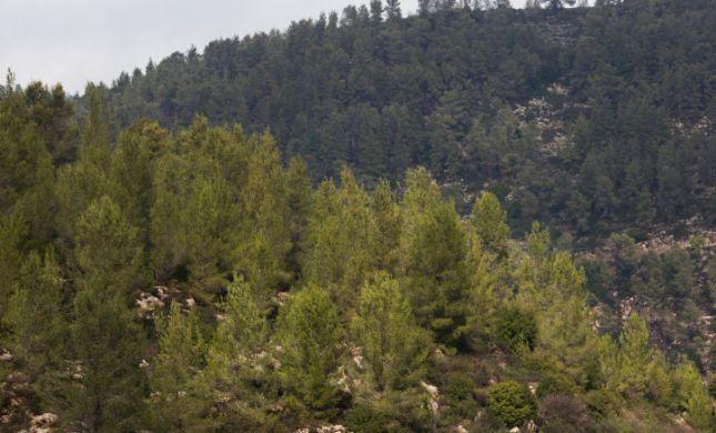 גופת גבר נמצאה ביער ירושלים