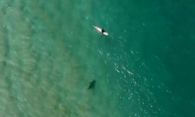 דרמה בים: רחפן הציל גולש מתקיפת כריש • צפו
