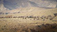 ארץ ישראל יפה, טיולים מדהים: 50 נשרים בארוחת בוקר במכתש הגדול