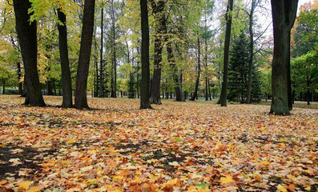 """עו""""ד על הפרשה • בשלח: על עצים ועל מנהיגי ציבור"""