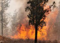 השריפה במבשרת ציון: הכבאים בלמו את האש