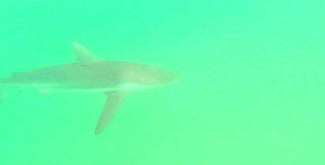 צפו: כריש בחוף חדרה ליד תחנת הכח