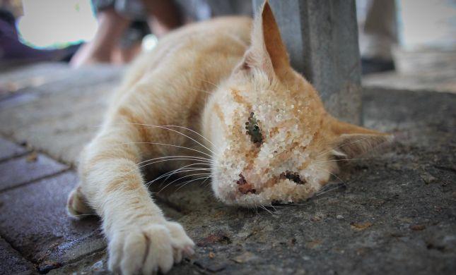 משרד החקלאות מזהיר: סכנה במזון לחתולים