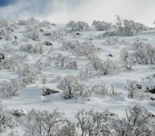 ארץ ישראל יפה, טיולים, מבזקים התגעגעתם? השלג סוף סוף הגיע. צפו בתיעוד