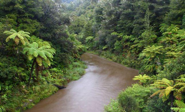 טרגדיה בניו זילנד: מטייל ישראלי נסחף בנהר ונהרג