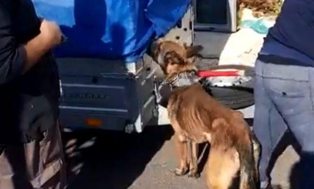 צפו: המשטרה הצילה כלבים שיועדו לקרבות