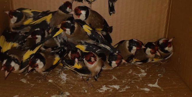 הזוי: לא תאמינו באיזו דרך ניסו להבריח ציפורים