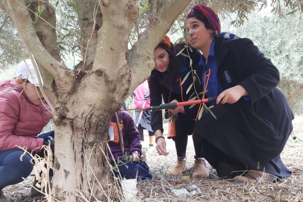 במקום נטיעות חניכי עזרא עזרו לחקלאי הנגב