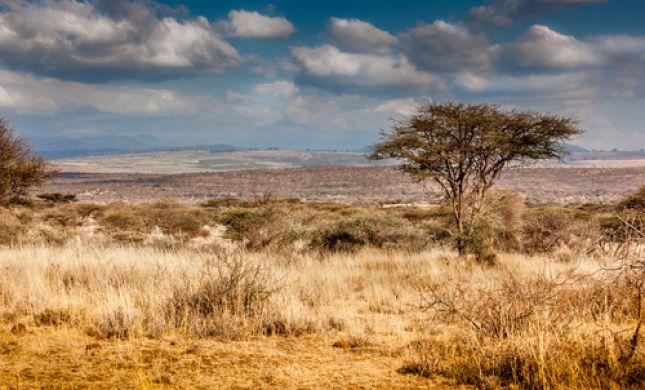 חם ויבש; סופות חול ואובך: תחזית מזג האוויר