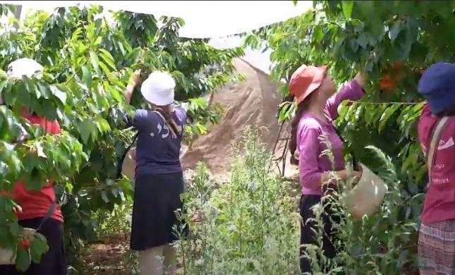 המדרשה שמשלבת עבודה חקלאית עם לימוד תורה