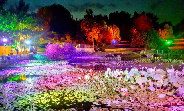 ארץ האגדות בירושלים: חוויה מיוחדת בגן הבוטני