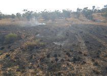 טרור הבלונים: אלפי דונמים של שמורת טבע נשרפו