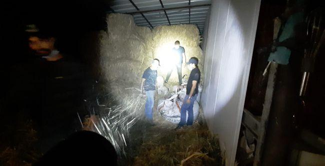 ערבי גנב 12 טון זיתים מחקלאים יהודים בגליל