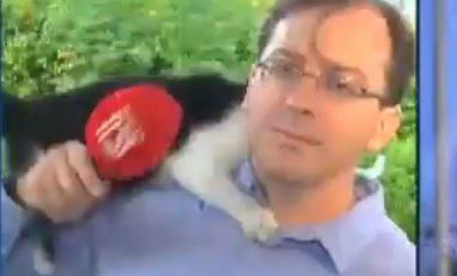 באמצע שידור: חתול זינק על כתב חדשות 13.צפו