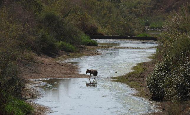 צפו: תמונות טבע מקסימות מנחל הירקון
