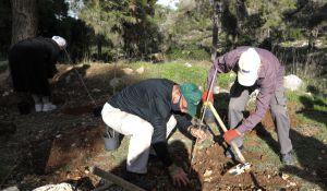 """ארץ ישראל יפה, טיולים איזה עץ כדאי? 6 עצות לנטיעות בט""""ו בשבט"""